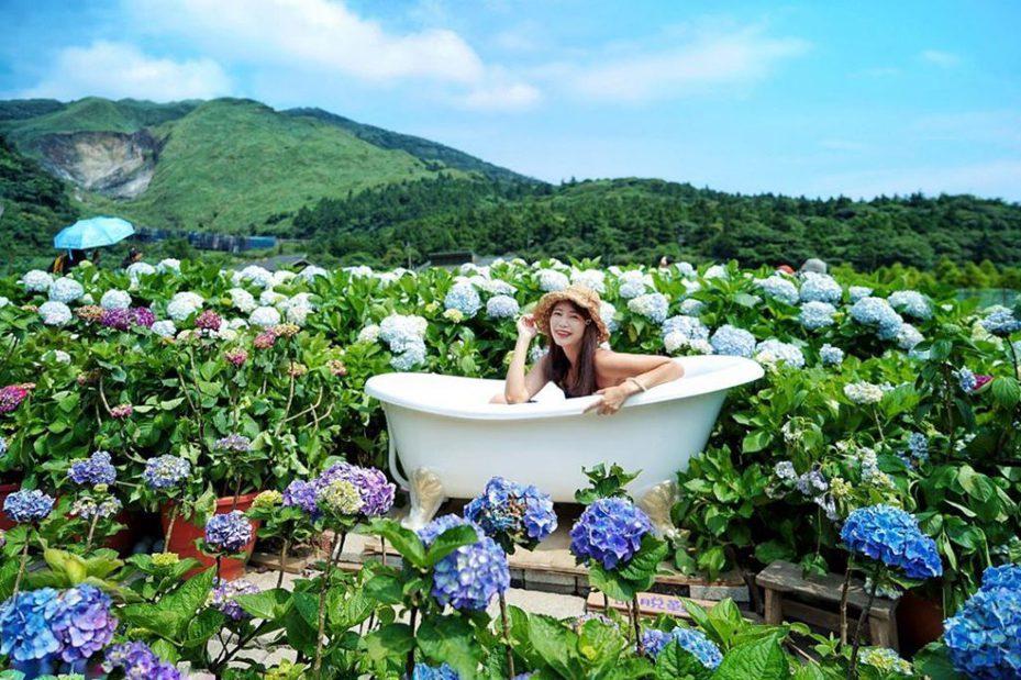 ▲陽明山花季-花谷海芋園。(圖/攝影者:nikkikiwang620授權提供, Instagram)
