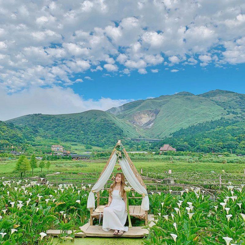 ▲陽明山花季-名陽匍休閒農莊。(圖/攝影者:wow_c_ee授權提供, Instagram)