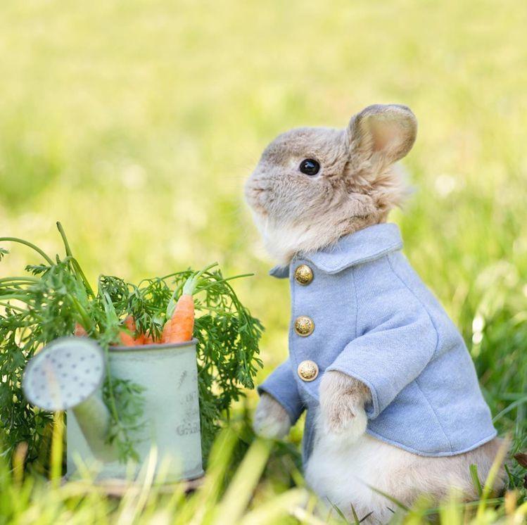 兔子Pico Pico裝扮成彼得兔的畫面甚為療癒。圖/取自IG
