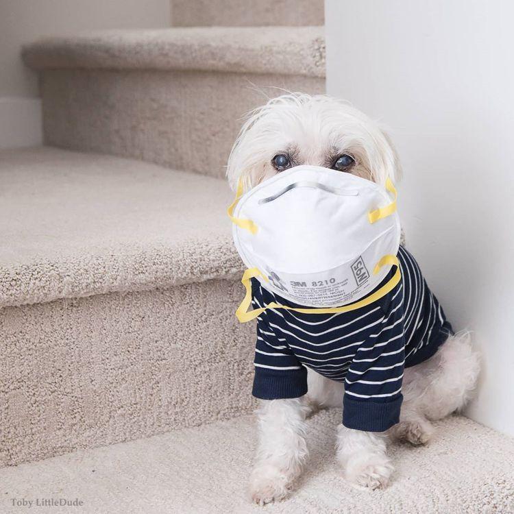 加拿大型男Toby戴上口罩,跟上防疫時事。圖/取自IG