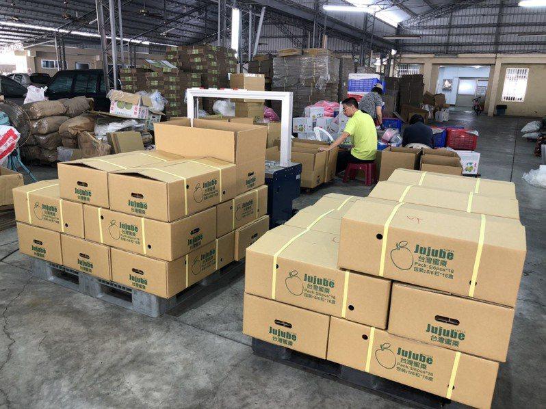高雄市阿蓮區農會加強蜜棗理貨裝櫃。圖/高雄市農業局提供