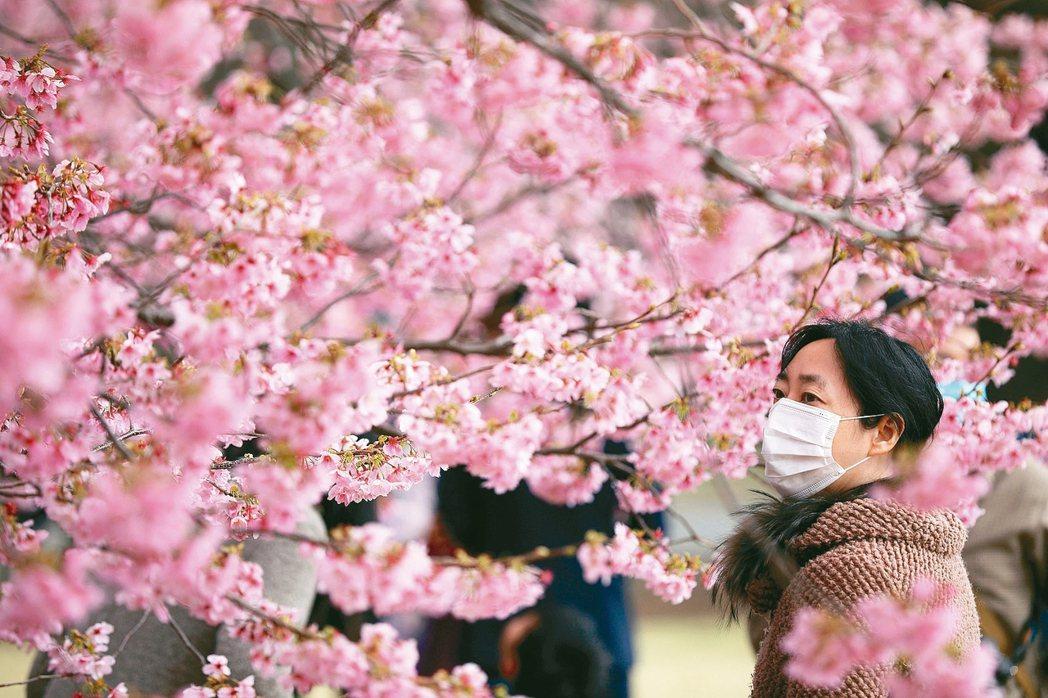 時序進入3月,正是春暖花開好時節,但花粉症的過敏現象,讓許多日本人想到春天就鬱悶...