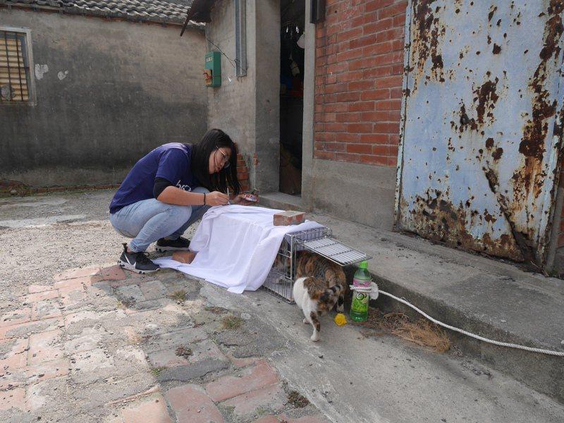 夜貓志工隊員利用誘捕籠,捕獲流浪貓為牠們結紮。圖/台灣之心愛護動物協會提供