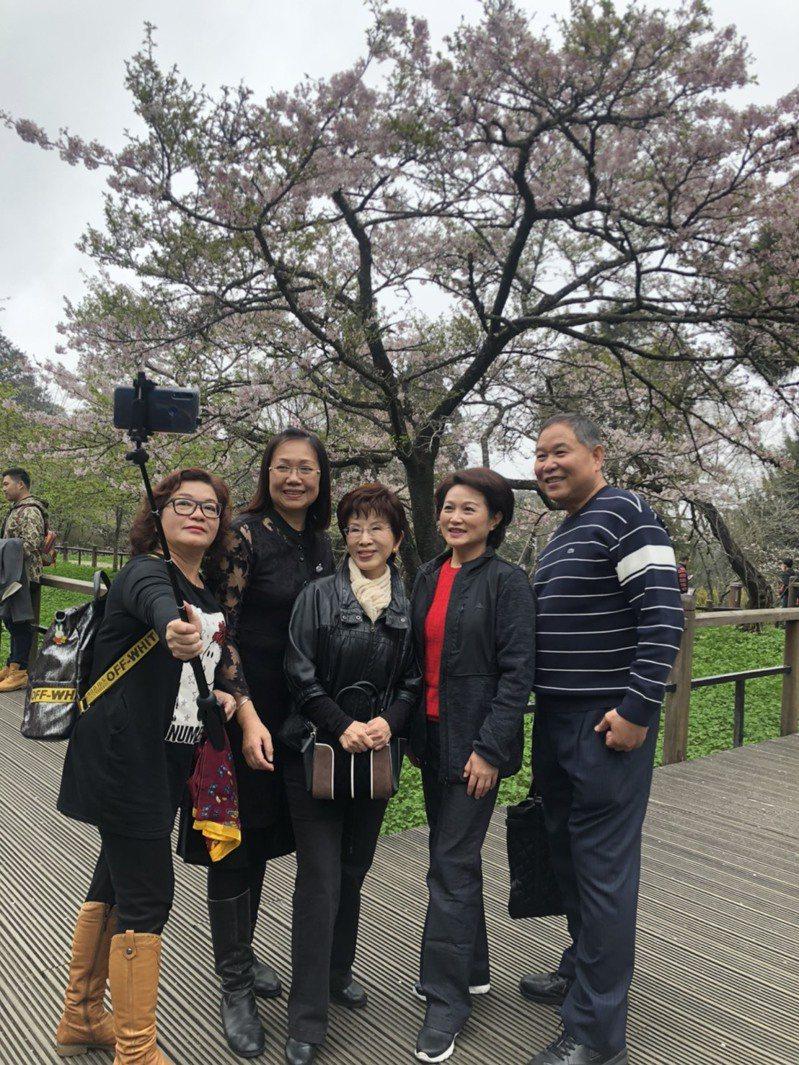 國民黨前主席洪秀柱(右三)來阿里山看櫻王,吸引大批民眾爭相合照。記者李承穎/攝影