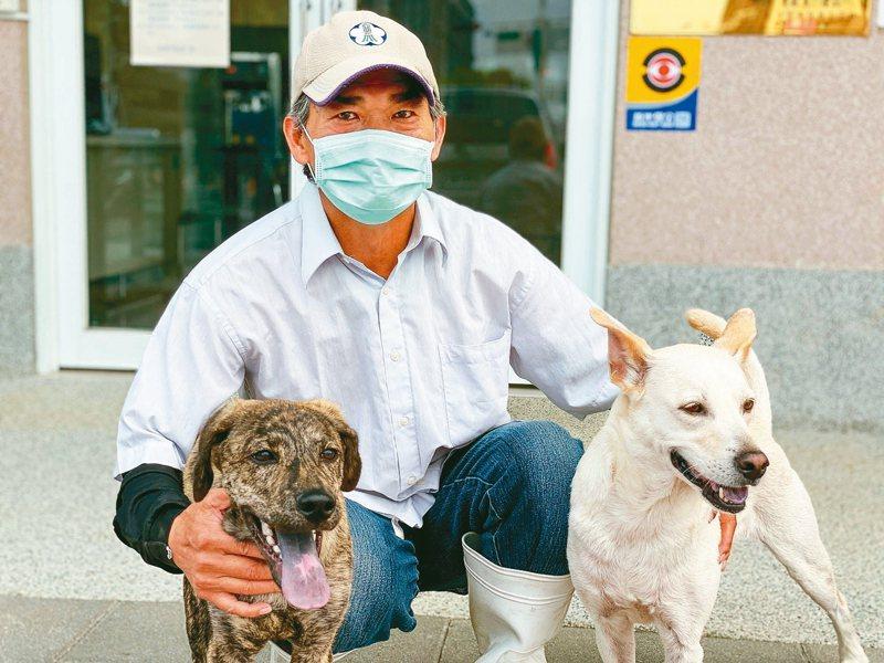 嘉義市動物保護教育園區獸醫師陳政興幫虎斑犬「Hito」復健,還讓白狗Julu帶領牠移動。 圖/嘉市府提供