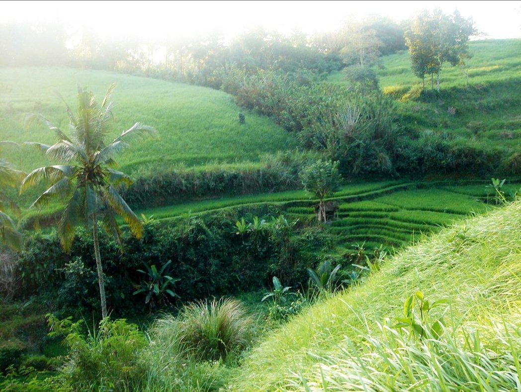 曾志偉在峇里島的基地。 圖/自然洋行提供