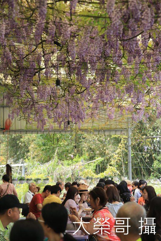06.紫藤花饗宴