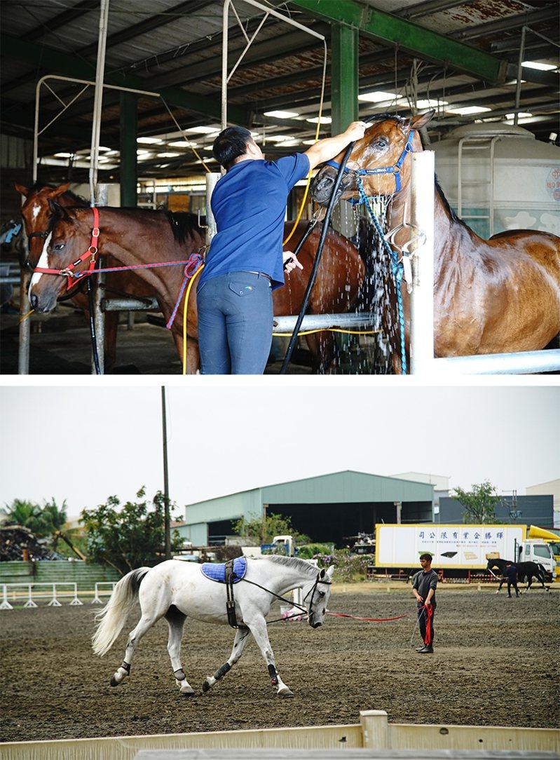 無論想要當選手、教練、馬事人員,每個人都必須要基礎訓練,所有馬場事務都要學習。 (攝影/曾信耀)