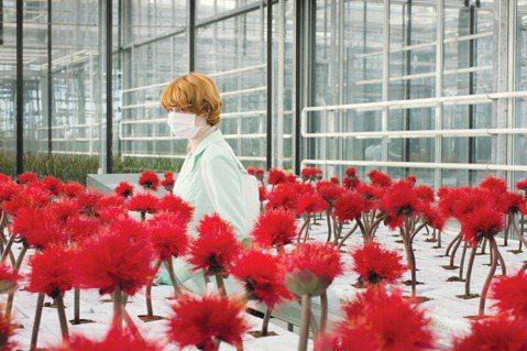 新冠肺炎疫情依舊緊張,但有些電影在這個時候看起來特別對味,由奧地利鬼才導演潔西卡賀斯樂(Jessica Hausner)執導的「小魔花」,電影講述科學家培育出新品種植物,原本是要帶給人類福祉,卻意外...
