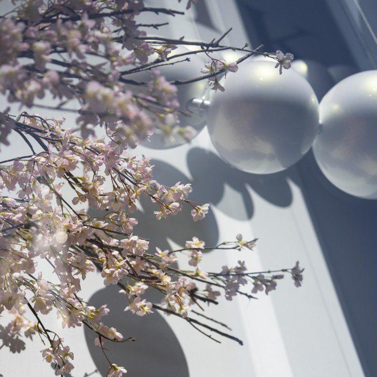 MIKIMOTO位於日本銀座四丁目的總店為迎來春天,換上櫻花美景的櫥窗。圖/取自...