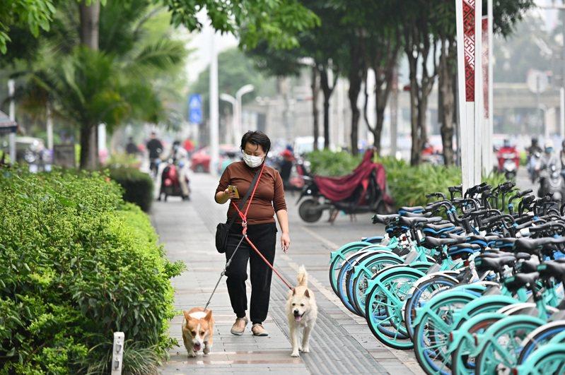 廣西南寧街頭,一名戴口罩的市民在遛狗。 中新社