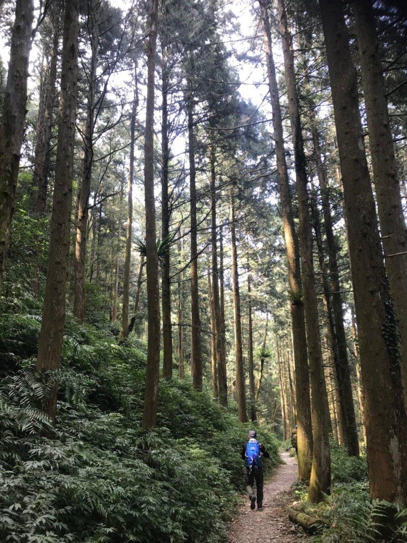 台灣山林分布許多美麗林道,要親身體驗才能感受大自然之美。 圖/徐白櫻 攝影