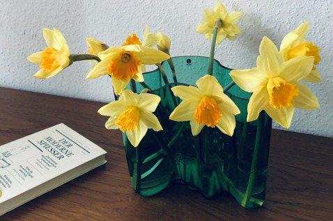 我將春季盛產的黃水仙放入花瓶中,才知道要將花擺得漂亮,需要功力。 圖/許育華拍攝