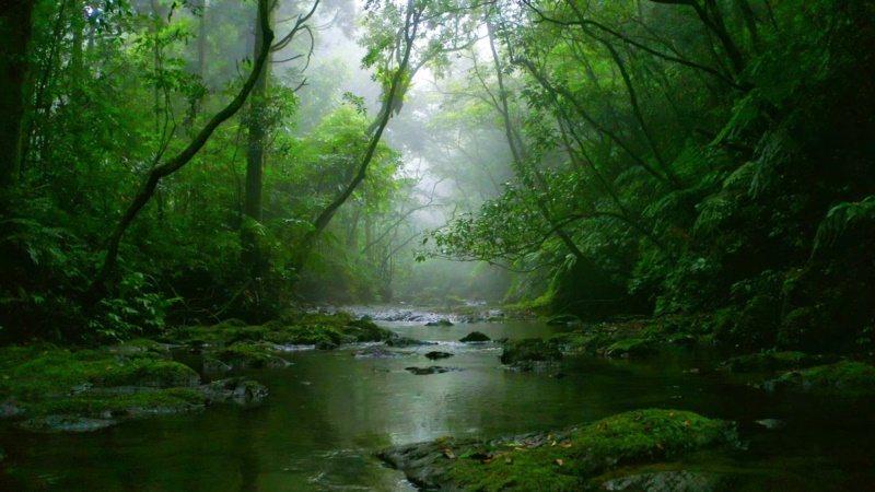 坪溪古道風景優美,如夢似幻。 圖/新北市觀光旅遊局提供