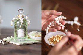 絕對必收~藝術品級絕美香水!嬌蘭鈴蘭香水瓶手工金線+白瓷花超仙