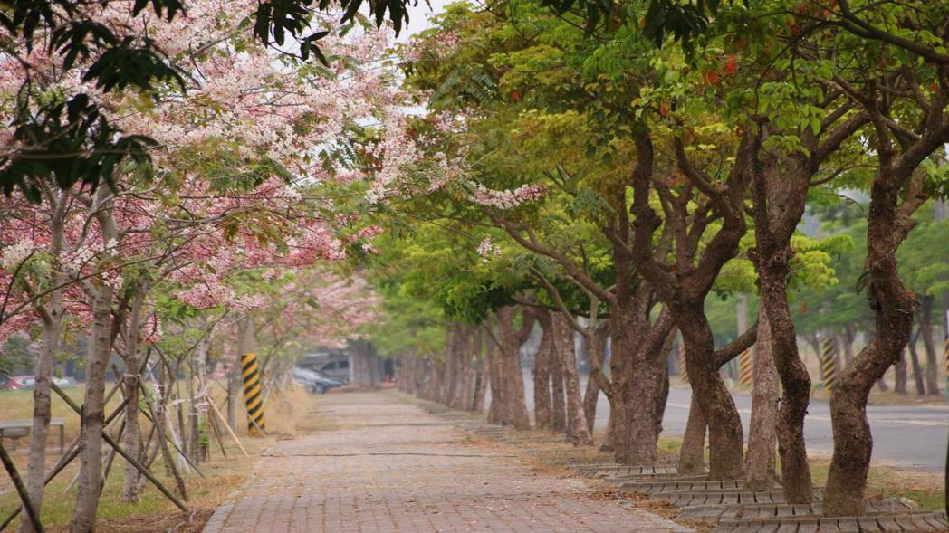 大門口左側花旗木步道。嘉南農田水利會/提供