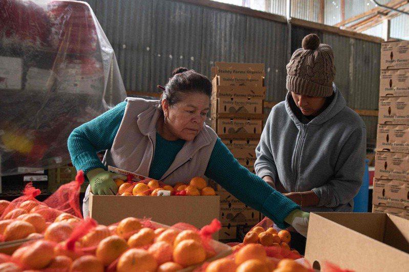 新冠肺炎疫情蔓延,全球約1/5人口受限於遏制病毒擴散的行動管制措施,糧食不保疑慮不斷升高。 法新社