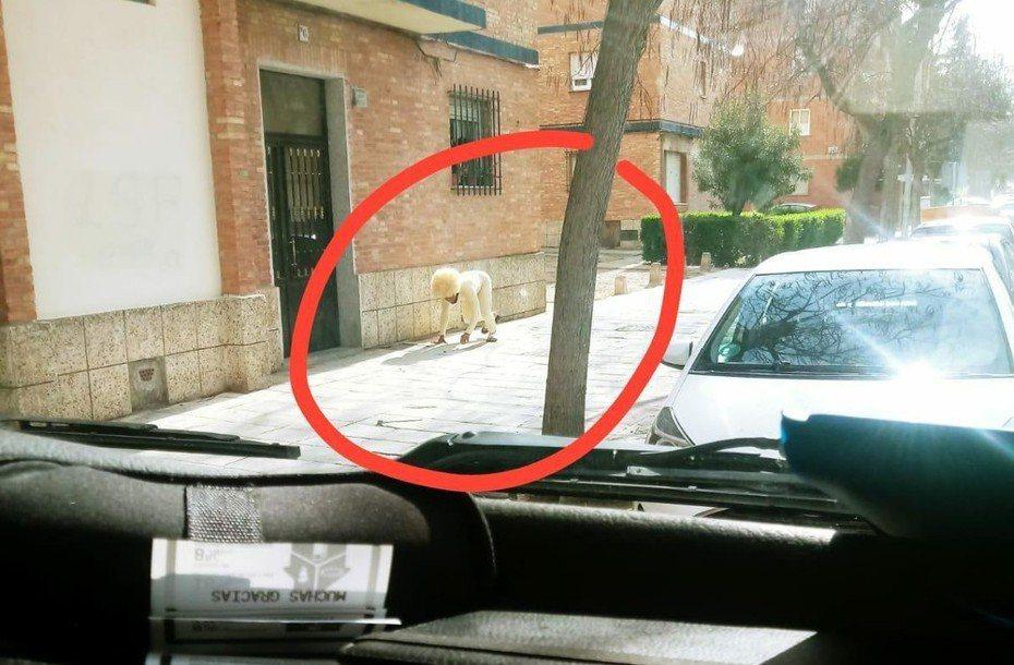 西班牙人為了出門不惜扮成狗。圖擷自Twitter@Talaverano78