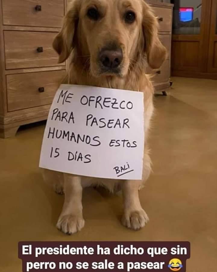 就是要出門!西班牙人不惜「扮成狗」 醫生哭求:別再這麼做