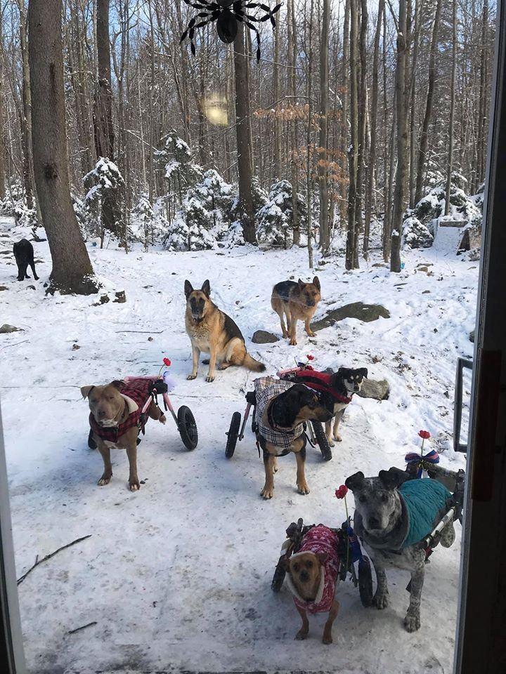 美國一名女子領養6隻殘疾狗狗,給牠們一個避風港。圖擷自facebook