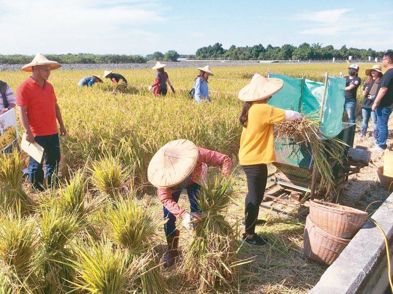 行政院院會拍板「農民退休儲金條例草案」,農民年滿65歲時,將可按月請領退儲金。 本報系資料庫