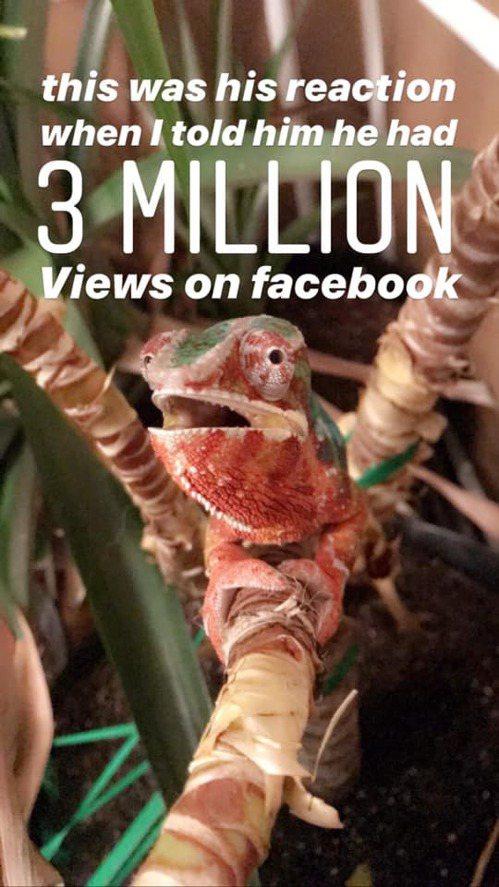 變色龍Zeke洗手的影片在網路上瘋傳,在得知影片破3百萬人觀看後,牠的表情也驚呆了。圖擷自FB Elizabeth Ann Poe