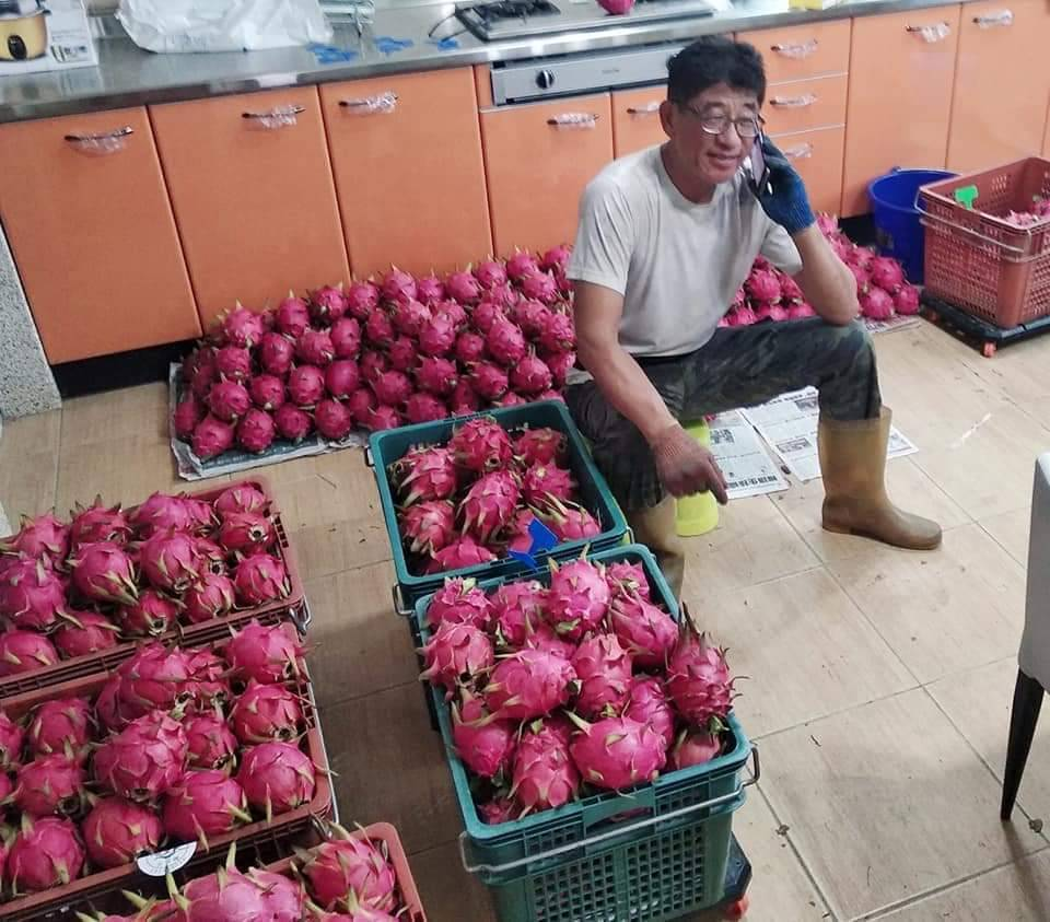 嘉義縣國小退休校長李榮善轉型農夫,種出優質火龍果。 圖/李榮善 提供