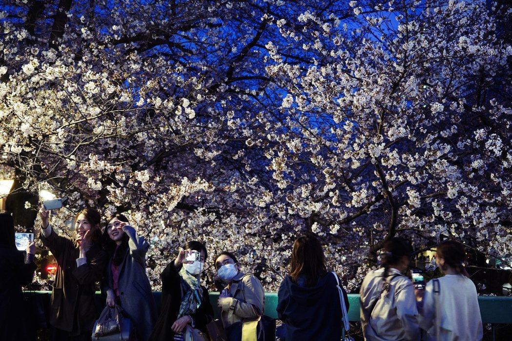 近一週以來東京都已經開始陸續湧現賞花人潮;而東京都在27日午後,也已緊急宣布上野...
