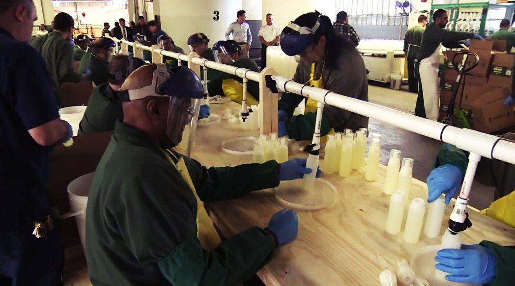 紐約州一方面要緩解監獄壓力,另一方面也在政府主導下開始動員受刑人勞工,趕工生產面...
