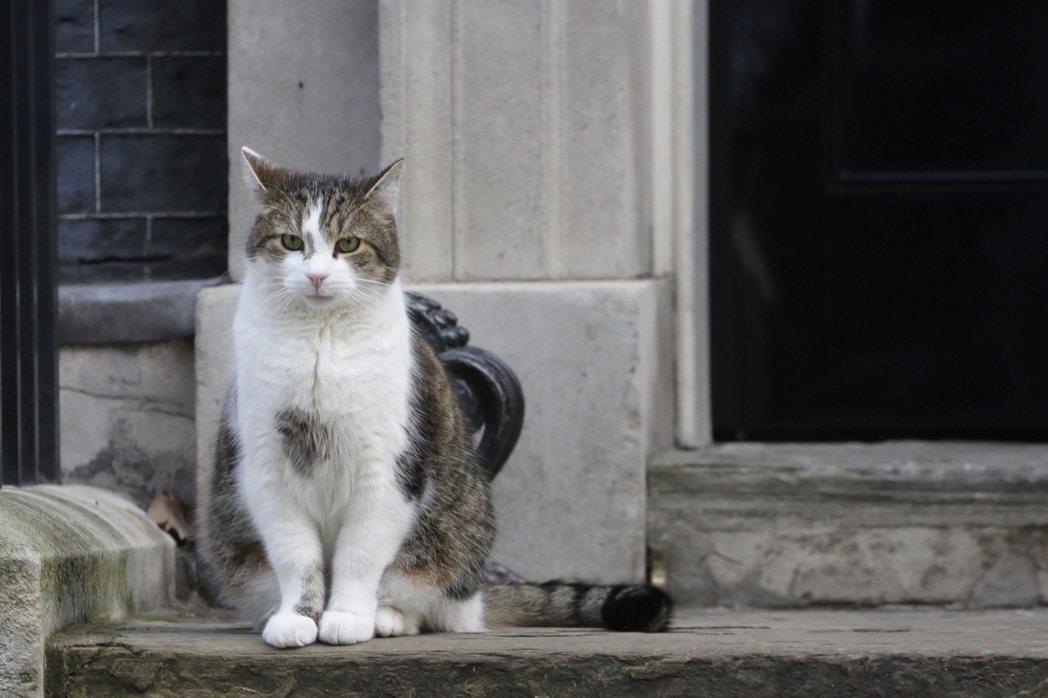 「愚蠢的人類啊!」(設計對白)圖為英國首席捕鼠官賴瑞貓。 圖/美聯社