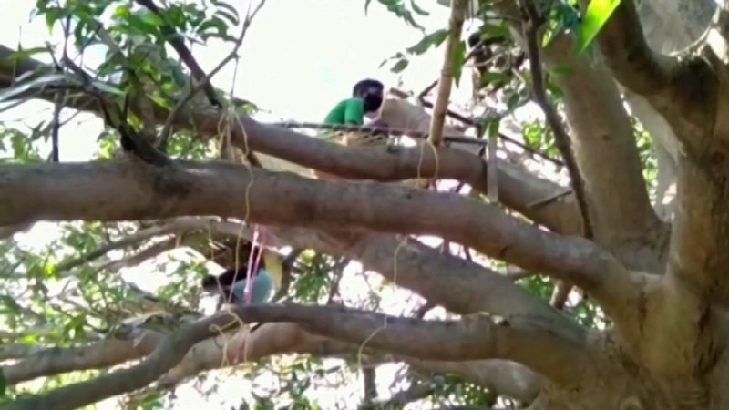 印度西孟加拉邦境內一處村落發生返鄉村民被要求住在樹上隔離14日,理由是村內泥房有5到6人居住,卻只有1到2個房間,因此在家隔離不可行。直到官方聞訊緊急介入,才把他們安排到臨時隔離設施。路透