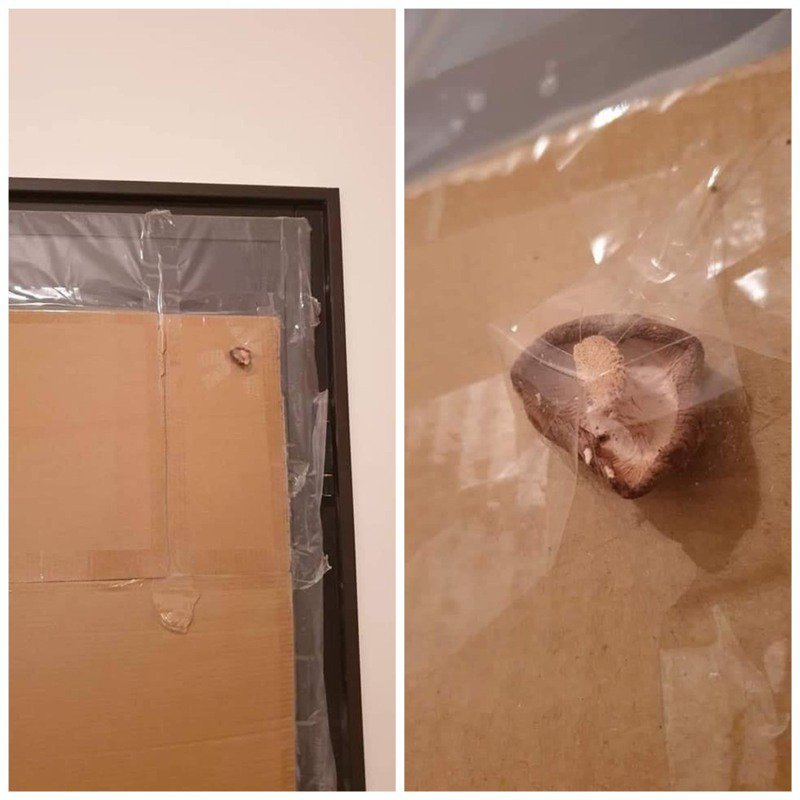 新房門後貼了一朵香菇。圖/取自爆料公社