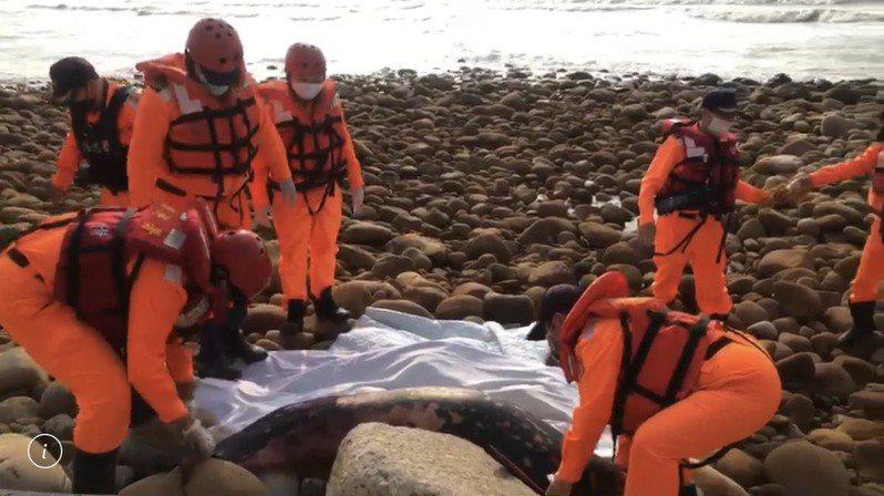 海巡署昨天在海邊拉上已死亡的江豚。圖/海巡署提供