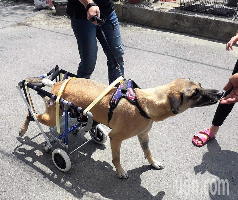 克洛下半身裝好輪椅、走路回家。記者卜敏正/翻攝