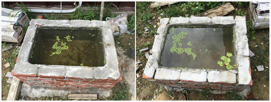圖左:施作樂土防水粉。圖右:施作同業水泥防水劑。