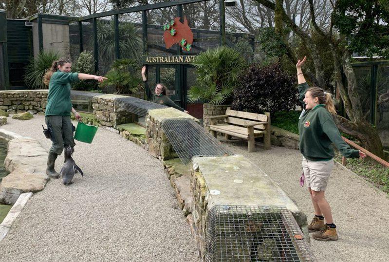 天堂公園的保育員們為了動物們的健康,選擇住進園內隔離。圖/Paradise Park