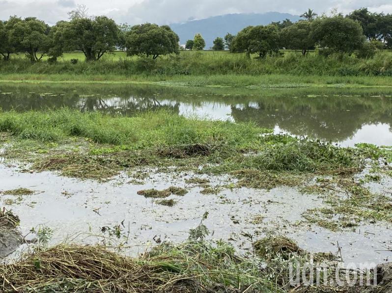 水芙蓉大量在河裡增生,阻礙水流,覆蓋水面,易讓水質優養化,魚兒窒息,俗稱「綠魔鬼」,轄管的第一河局、縣政府將施工單位在4月15日前完成清理。記者羅建旺/攝影