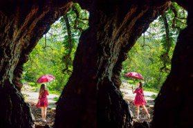 透過神木「看見台灣」!300歲茄苳老樹洞呈台灣地圖 絕美奇景在南投