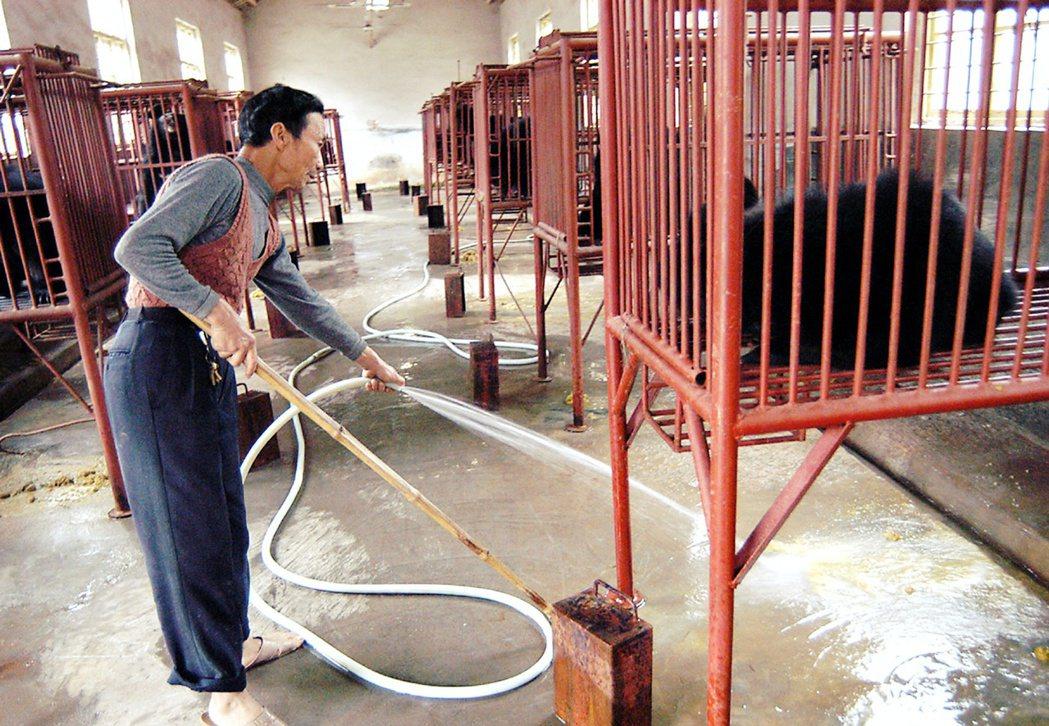 熊膽作為中藥的作用,最早記錄於中國唐代;但真正開始以人口飼養手段,大量「活體取膽...