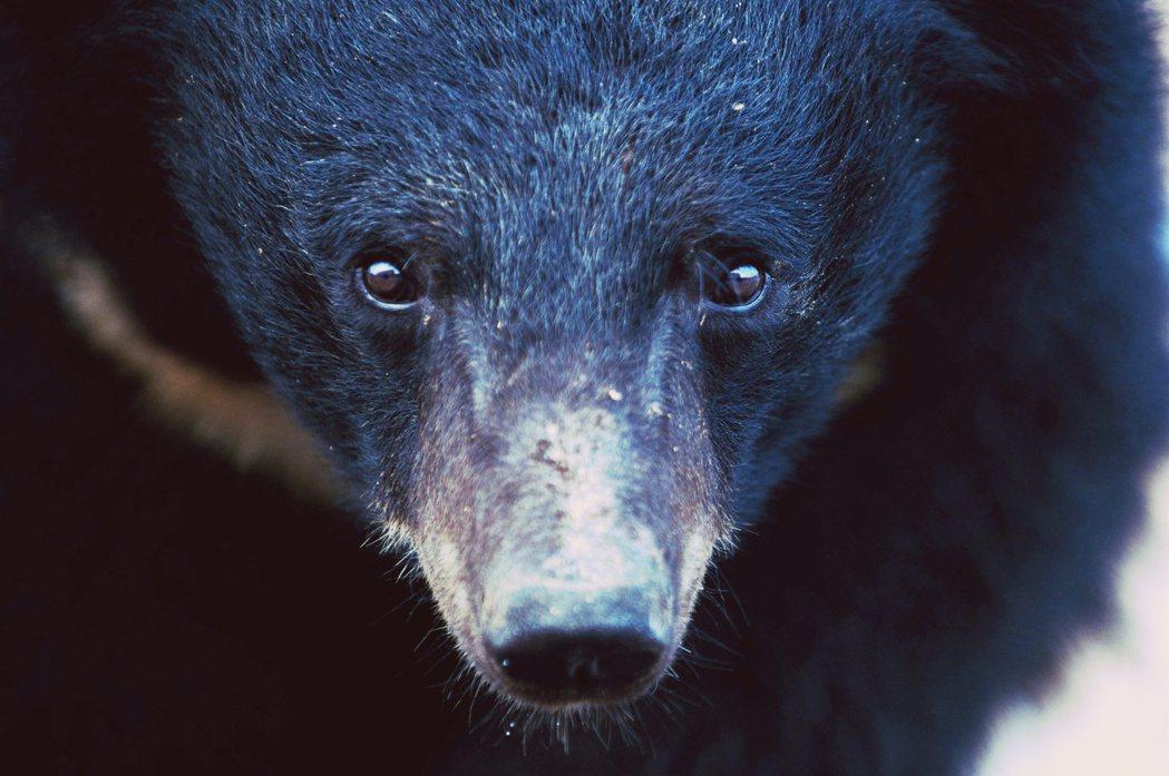 「你又不是熊,你怎麼知道痛不痛?」 圖/法新社