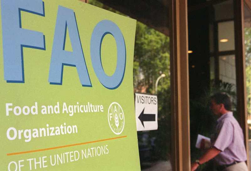 聯合國糧農組織表示,新冠疫情和油價崩跌,讓全球糧食價格3月大幅下滑。美聯社