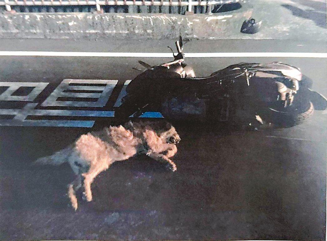 近年因流浪貓狗發生的車禍案很多。圖/警方提供