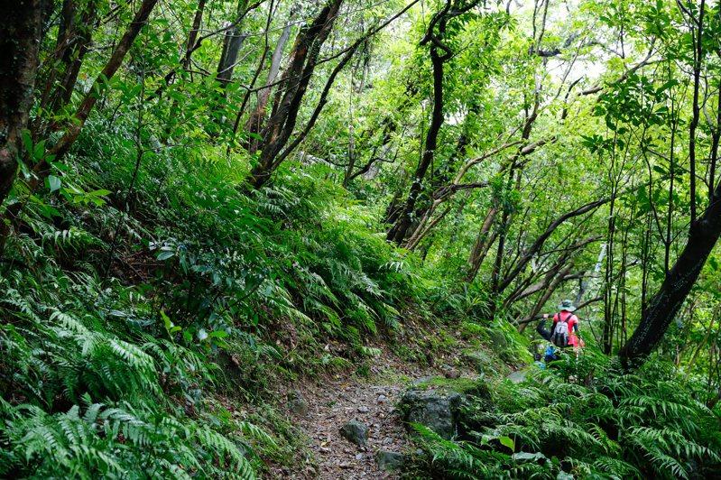 淡蘭古道包括30多條步道系統,各有特色,如燦光寮登山步道風景就相當迷人。圖/新北市觀光旅遊局提供