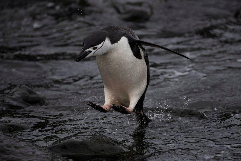 南極半島大多數生物身處小型無冰綠洲上,依靠融雪融冰提供水源。 路透社