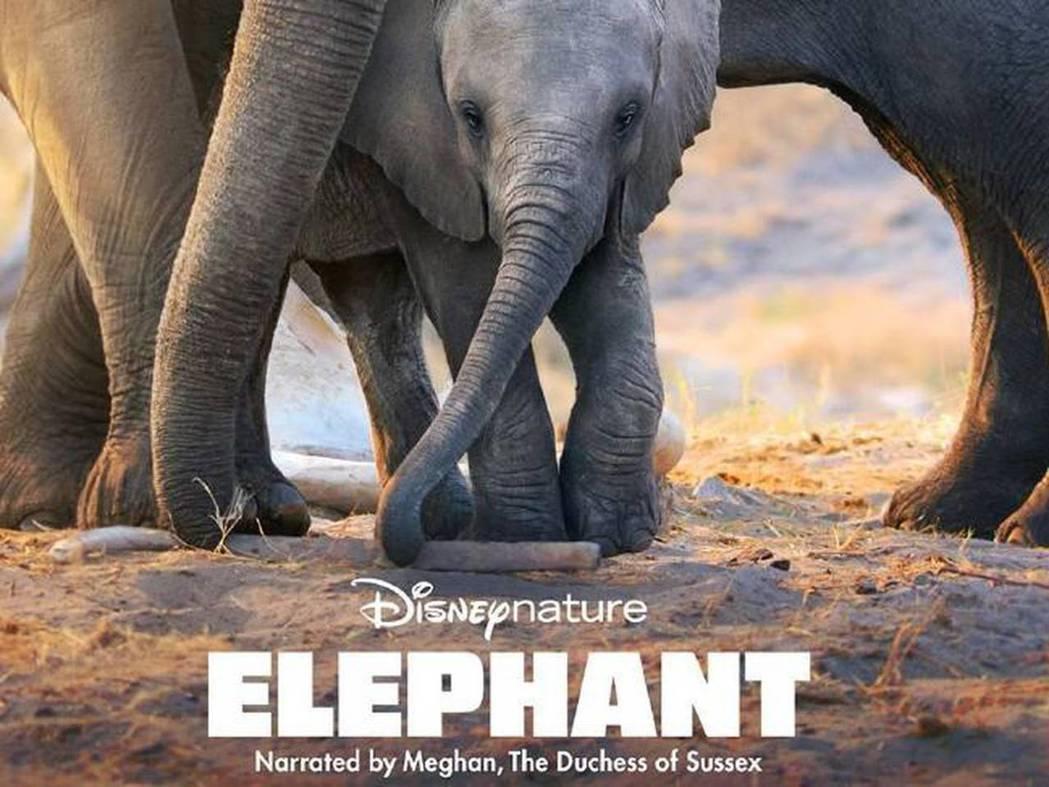 梅根為迪士尼最新大象紀錄片擔任旁白,英國媒體嫌她的聲音表情過度戲劇化。圖/摘自d...