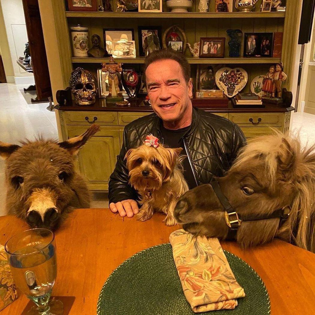 阿諾與自己的愛犬、驢子以及迷你馬等寵物合影。圖/摘自IG
