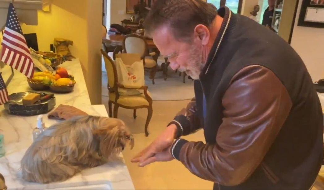 阿諾先前還與愛犬一起合影拍攝洗手影片。圖/摘自IG