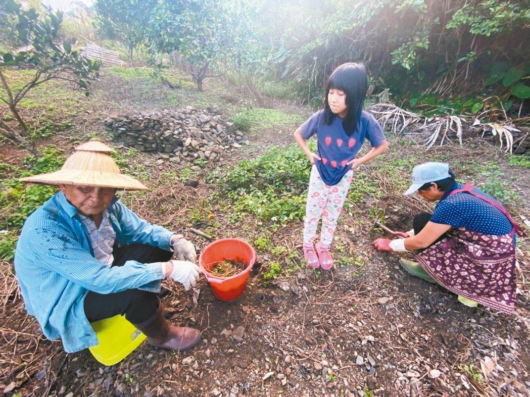部落的年輕人認為,孩子可以跟著部落耆老一起生活與工作,是最佳的老幼共學。圖╱宜蘭...