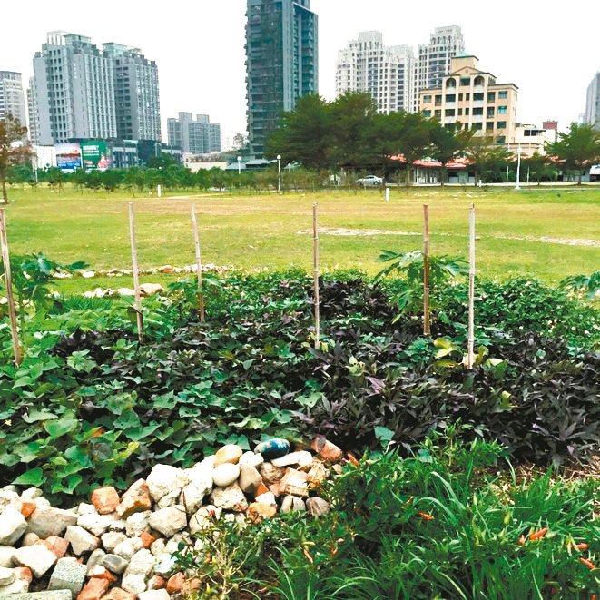 在台灣,即使大樓林立的都會區,也不難在近郊農場買到新鮮蔬果。 圖/朱慧芳