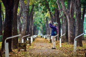台灣也有韓劇《愛的迫降》絕美場景!嘉義桃花心木落葉成地毯